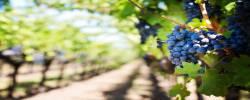 Acquisition d'un domaine viticole